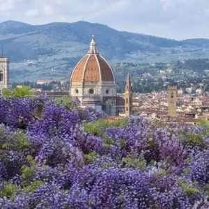 Wisteria, Bardini gardens, Florence
