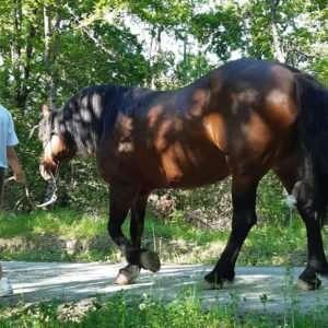 Tour Coccole in Appennino - esperienza su cavallo bardigiano (4) (1)